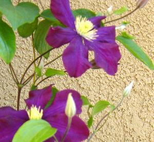 Climbingflowers